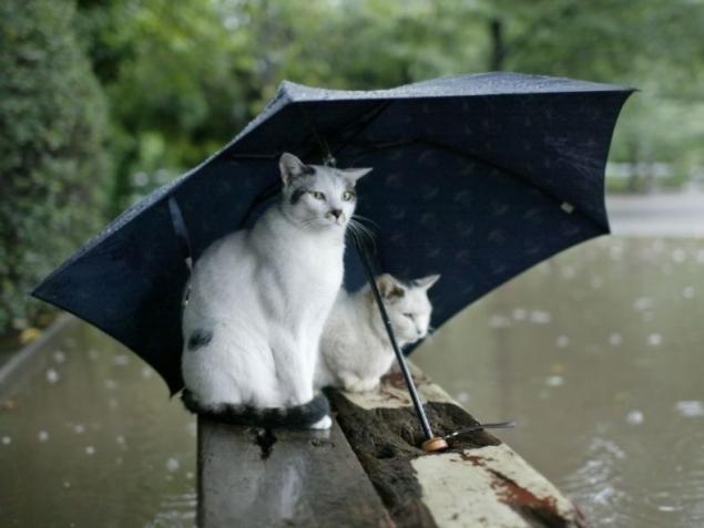 дождь летом фото