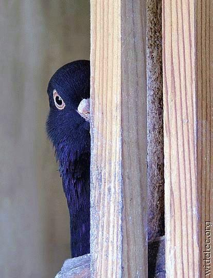 Картинки про, картинки голубы приколы