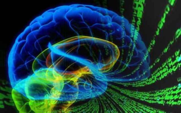 паразиты в мозге человека лечение народными средствами