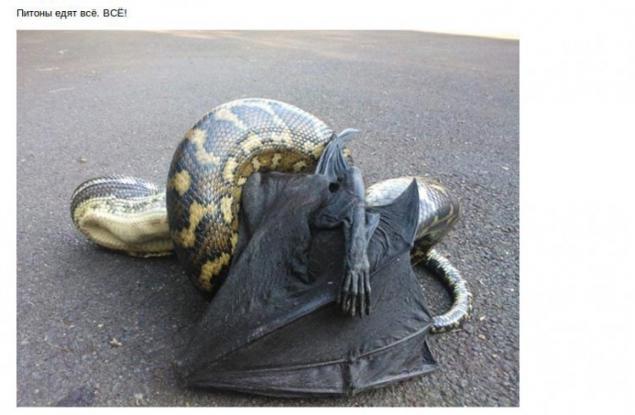 澳大利亚动物的特点